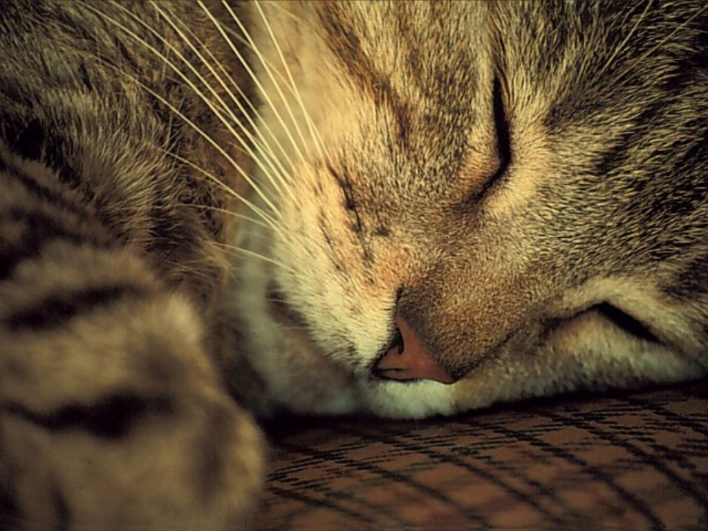 Le chat - une Histoire Erotique HDS - histoires-de-sexenet